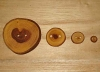 "3/8""  Fallen Weeping Elm Wood Button (NEW)"
